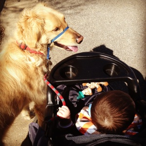 Taking Toby for a walk in our jogging stroller.